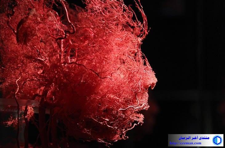 الأوعية الدموية الانسان
