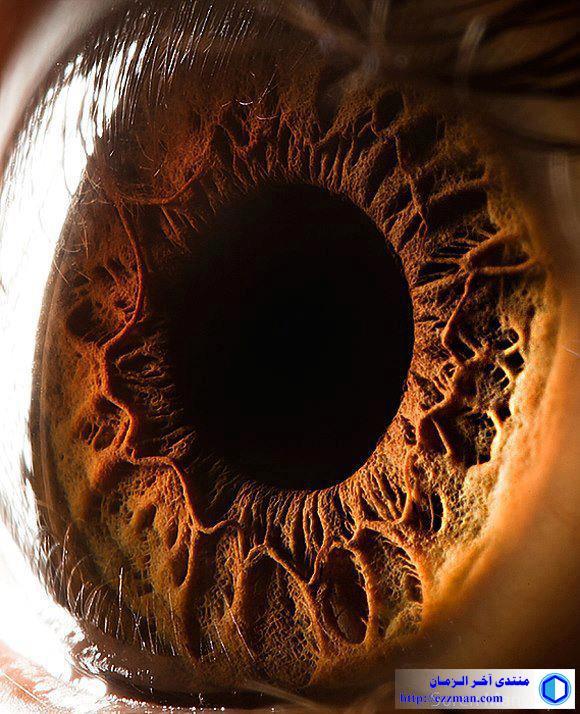 صورة مقربة عالية الدقة لعين