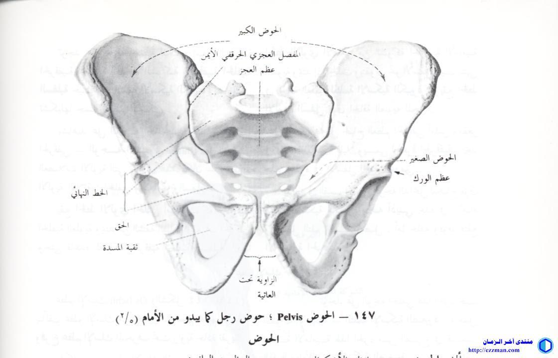 الحُقّ acetabulum [تشريح]