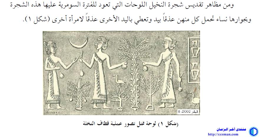 النخلة الجزيرة العربية خلال المصادر