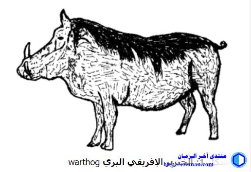 تاريخ الخنزير وانتشاره وادي النيل